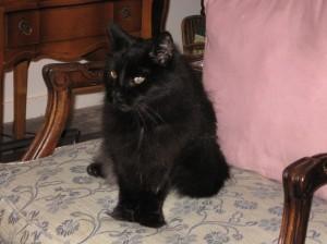 Velvet in 2006