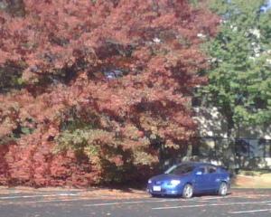 Last Fall Hurrah.jpg