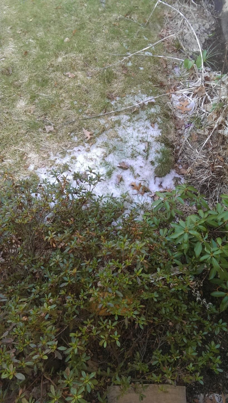 Snow in yard