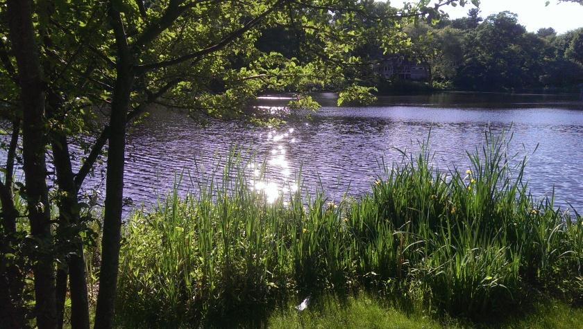 Bulloughs Pond, Newton, MA