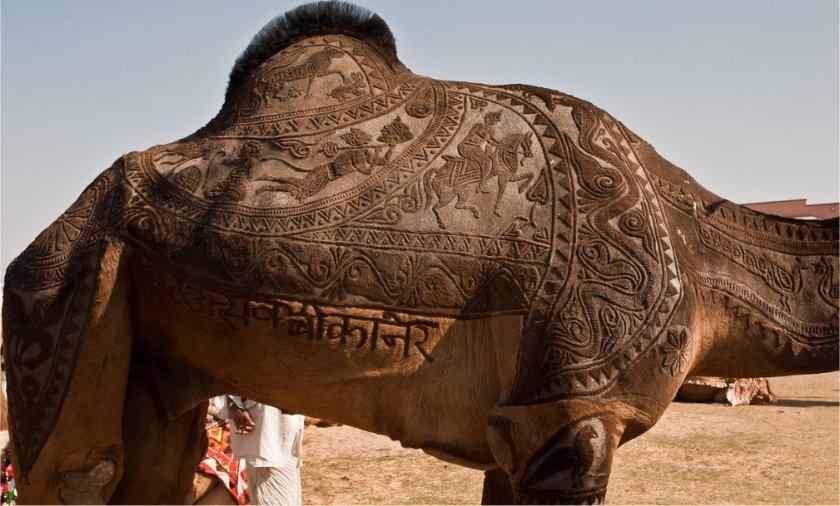 the indian city of bikaner host an annual camel festival in january. the designs are the results of trimming and dying the camel hair. photos steve hoge and osakabe yasuo (2)