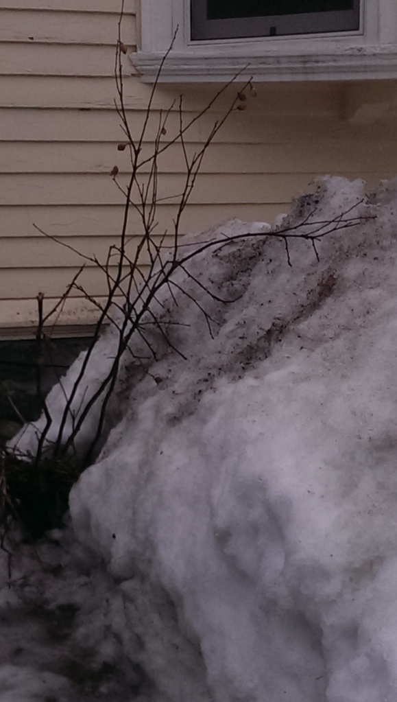 branch against snow bank